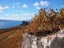 De Lavaux vingårdarna i höst i Schweiz Arkivfoto