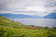 De Lavaux vingårdarna i Schweiz royaltyfri fotografi