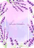 De lavendel bloeit achtergrondontwerp Royalty-vrije Stock Foto's