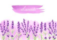 De lavendel bloeit achtergrondontwerp Stock Foto
