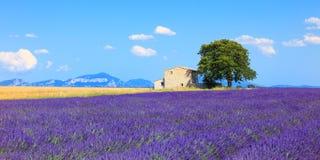 De lavendel bloeit bloeiende gebied, huis en boom. De Provence, Frank