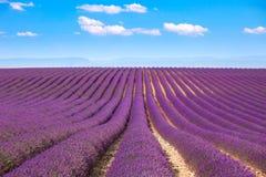 De lavendel bloeit bloeiende gebieden Valensole de Provence, Frankrijk stock afbeelding