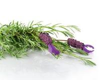 De lavendel bloeit close-up Stock Foto