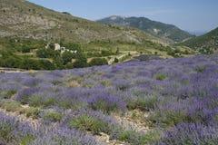 De lavendel van de landschapsprovence Stock Afbeeldingen
