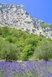 De lavendel van de Provence Stock Afbeeldingen