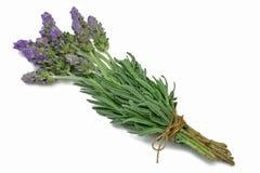 De Lavendel van de Reeks van het kruid royalty-vrije stock afbeelding
