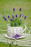 De Lavendel van de tuin Stock Afbeeldingen