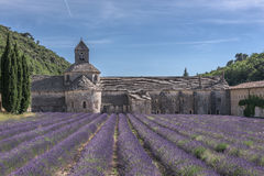 De lavendelgebied van de Provence van de Senanqueabdij! Stock Afbeelding