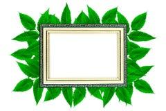 De lay-out van gouden houten kader op groene bladeren isoleerde achtergrond, luxe en aardconceptenmodel royalty-vrije stock afbeelding