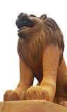 De leeuw Stock Foto
