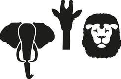 De Leeuw van de olifantsgiraf Royalty-vrije Stock Afbeelding