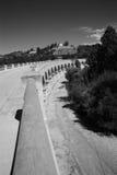 De Leeuwen van het Hollywoodmeer Stock Afbeeldingen