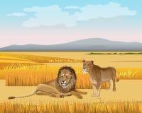 De leeuwin en de leeuw in de savanne stock illustratie