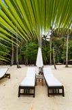 De lege bedden van het luxestrand onder een palm Royalty-vrije Stock Foto