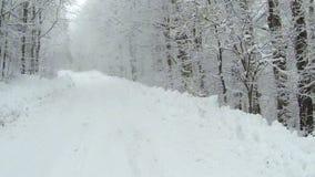 De lege sneeuw behandelde weg in de bergen tijdens de wintertijd met bomen aan de kanten stock video