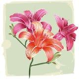 De lelie bloeit grunge achtergrond vector illustratie