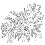 De lelie van de bloem, contouren Royalty-vrije Stock Fotografie