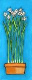 De Lelies van Paperwhite Stock Afbeelding