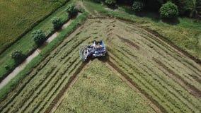 De lengte in Rijstlandbouwbedrijf bij het oogsten van seizoen door landbouwer met maaidorsers stock video