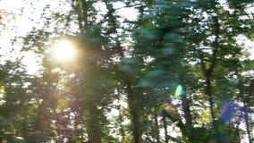 De lengte van het drijven van auto onderaan een landelijke die weg met bomenbos de zon wordt gevoerd glanst door het hout, lopend stock footage