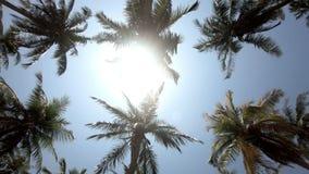 De lensgloed van de palmenzonsopgang door palmbladen op een mooie blauwe hemelachtergrond stock videobeelden