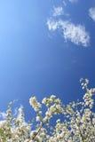 De lente. Royalty-vrije Stock Afbeeldingen