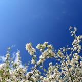 De lente. Stock Afbeeldingen