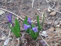 De lente! stock afbeelding