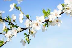 De lente Stock Foto