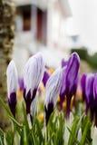 De lente! Royalty-vrije Stock Fotografie
