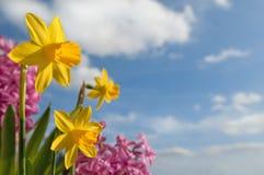 De lente Royalty-vrije Stock Foto