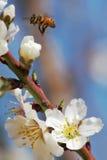 De lente #3. stock afbeelding