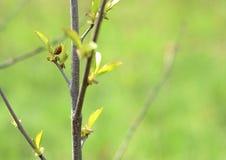 De lente Stock Afbeelding