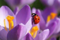 De lente!!! royalty-vrije stock foto