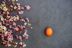 De lente Stock Fotografie