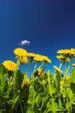 De lente Stock Foto's