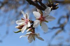 De lente, Stock Afbeelding