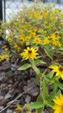 De lente aan het levens jonge bloem Royalty-vrije Stock Foto's