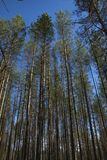 De lente, aard, de lentebos, gebieden, meren en rivieren royalty-vrije stock foto's