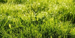 De lente achtergrondsamenvatting met verse groene gras en dauwdalingen Stock Foto's