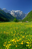 De lente in alpiene vallei Stock Afbeeldingen