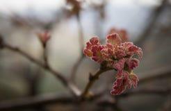 De lente begint in de wereld royalty-vrije stock afbeeldingen