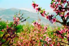 De lente in berg Stock Foto