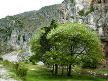 De lente in bergen Stock Fotografie