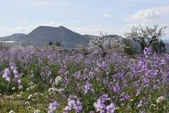 De lente in bergen blossoming schoonheid royalty-vrije stock foto's