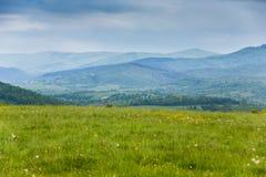 De lente in bergen Gebied van de lentebloemen Royalty-vrije Stock Afbeelding