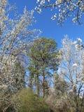 De lente bij het park Stock Foto
