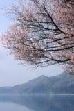 De lente bij Meer Tazawa Stock Foto's