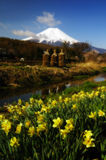De lente bij MT Fuji Royalty-vrije Stock Foto's