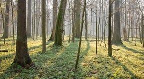 De lente bij natuurlijk bos Stock Afbeelding